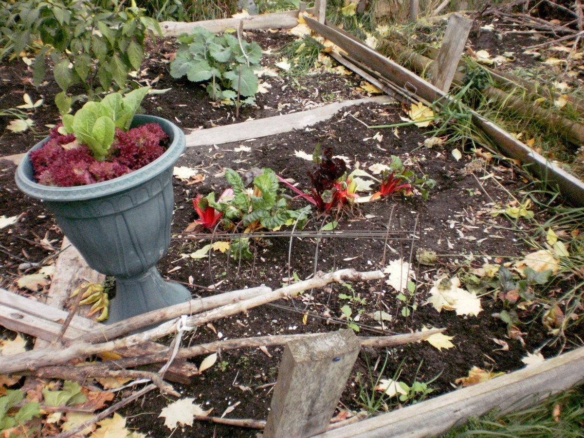 Community gardens ready to brave the winter